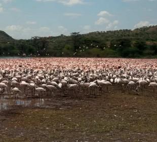 5-Day Masai Mara, Lake Naivasha, Lake Nakuru Safari
