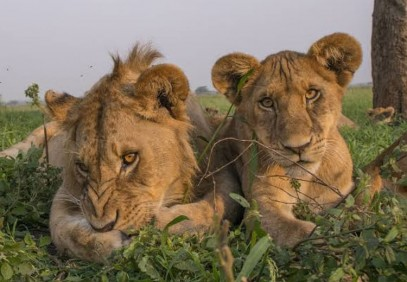 3-Day Tanzania Mid Range Hotel Safari