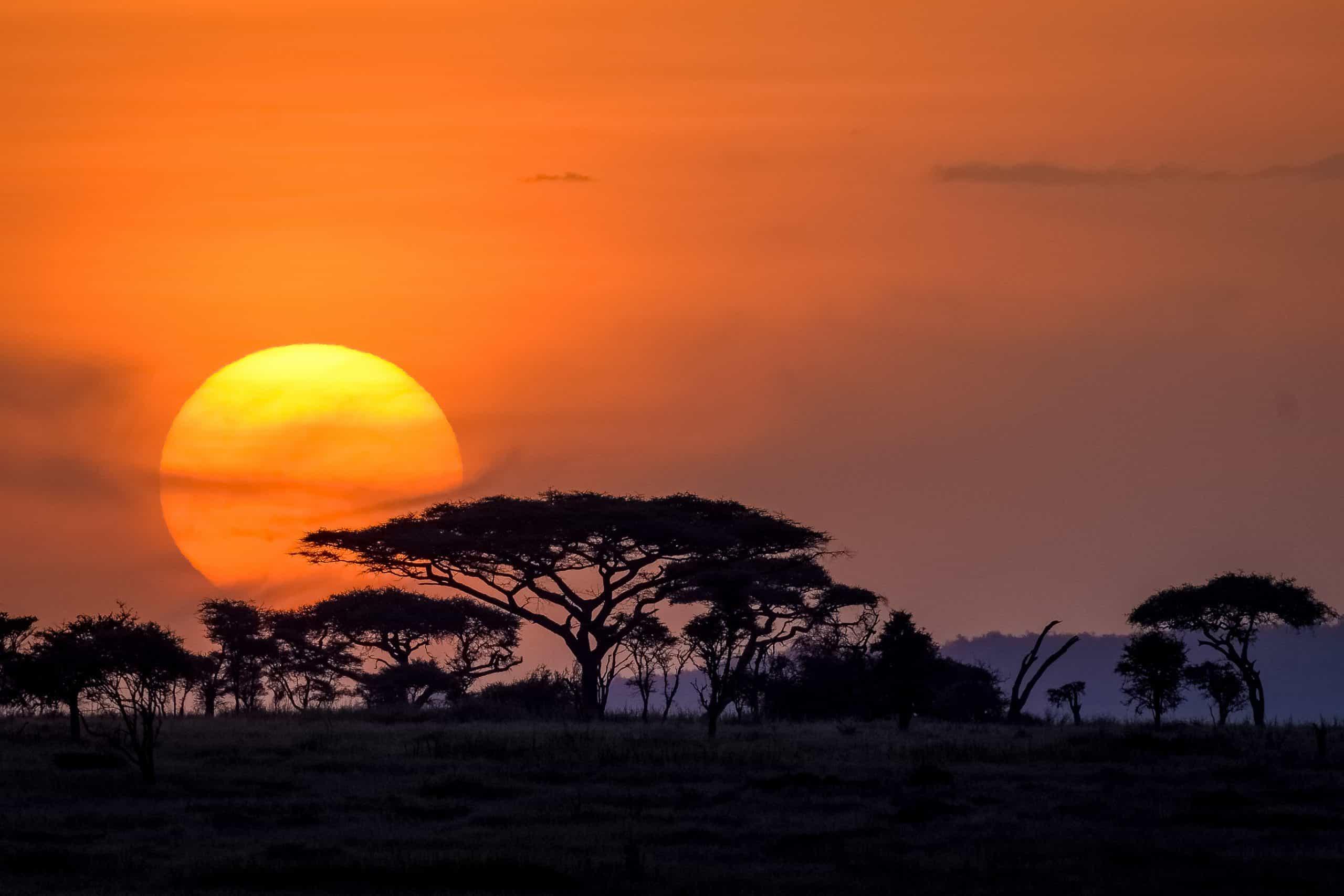 Serengeti Sunset 1001