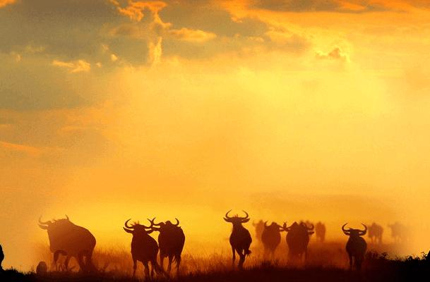 The Great Wildebeest Migration Safari E1501858203686