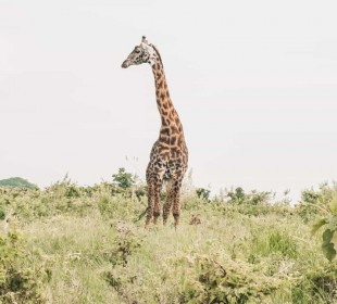 3 Days Northern Tanzania Safari
