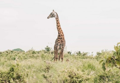3 Days Northern Tanzania Safari