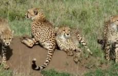 4-Day Kidepo Wildlife Safari