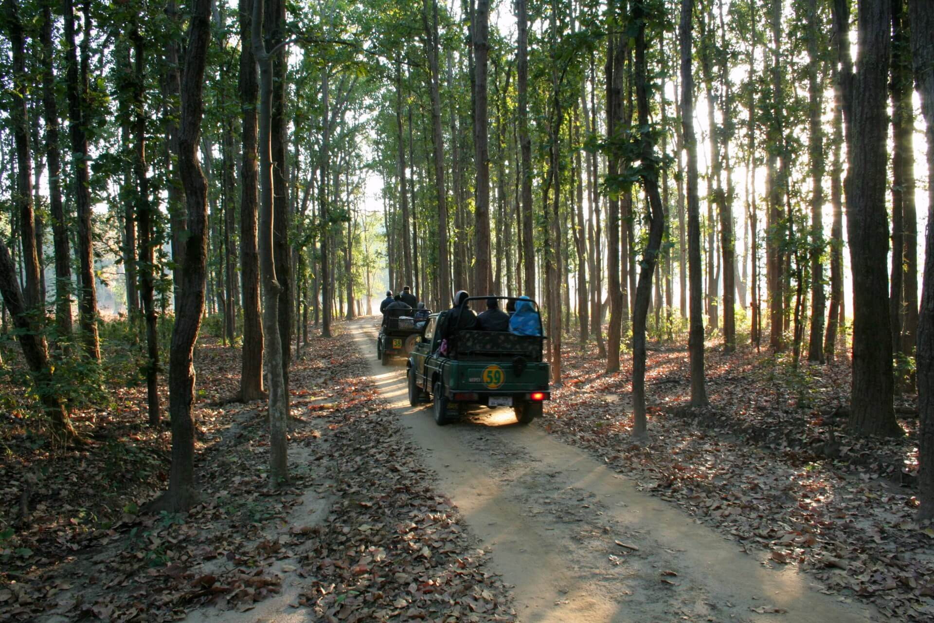 Kanha National Park, Madhya Pradesh Safari (1)