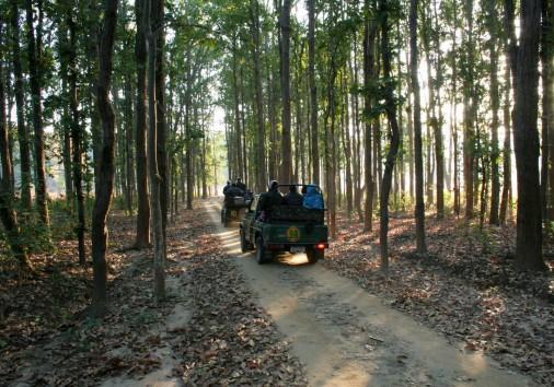 Kanha National Park, Madhya Pradesh Safari