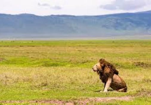 Lion In Ngoro