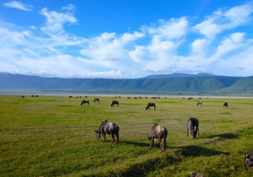 Ngorongoro (2)
