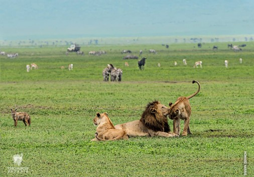 Ngorongoro Crater Wildlife