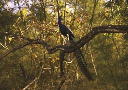 Wildlife Sanctuary 20
