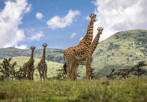 safari in Tanzania with see adventures