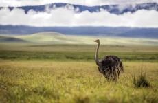 6 Days Tanzania Northern Parks Camping Tour