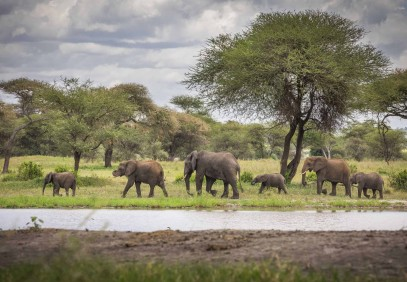 4-Day Tanzania Wildlife Safari
