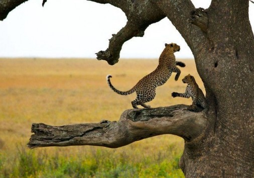 3 Days Serengeti Wildlife Safarii 750x450