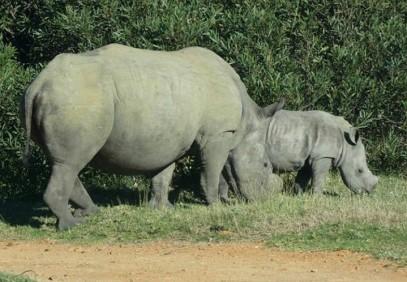 5-Day Tanzania Northern Circuit Safari