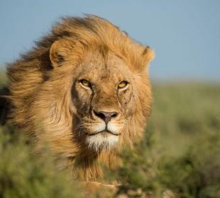 7-Day Tanzania Big Five Adventure