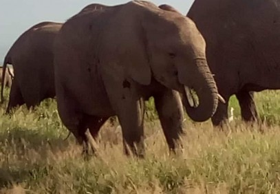 5-Day Kenya Game Parks Safari