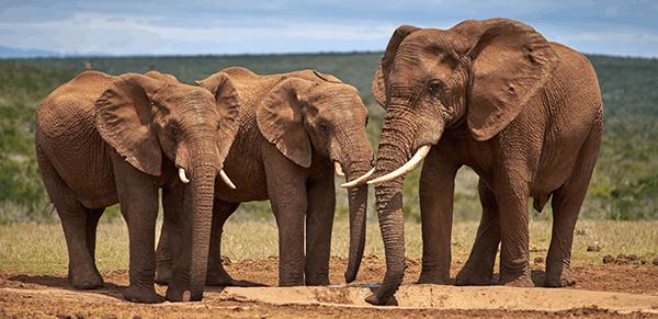 Addo Elephant National Park 2