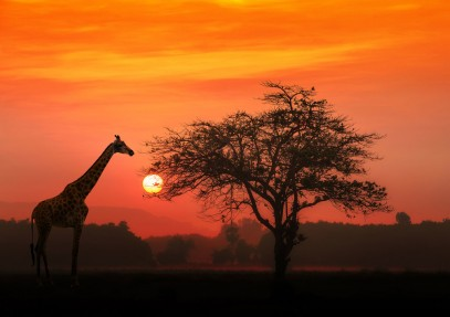 The Ultimate List of African National Parks and Game Reserves