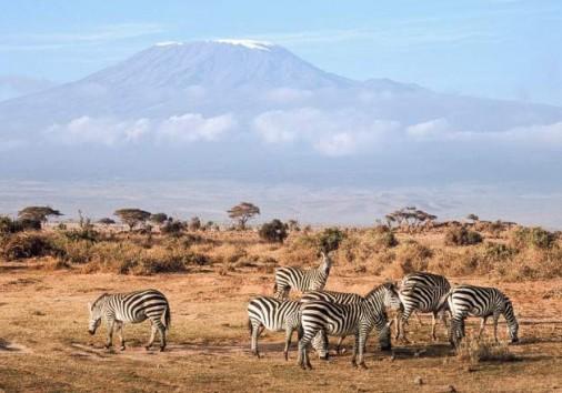 Amboseli National Park 025