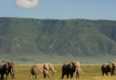 3 Days Serengeti & Ngorongoro Crater Private Safari