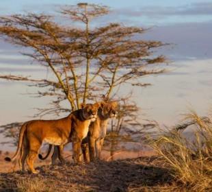 5-Day Masai Mara & Lake Naivasha Safari