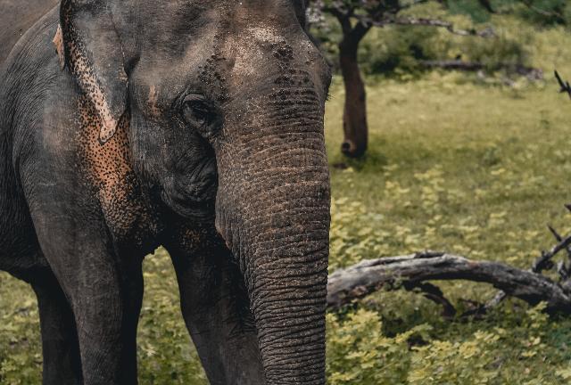 Discover Abundant Wildlife
