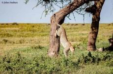 Northern Tanzania Wildlife Safari