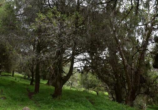 Harenna Forest Bale Mountain