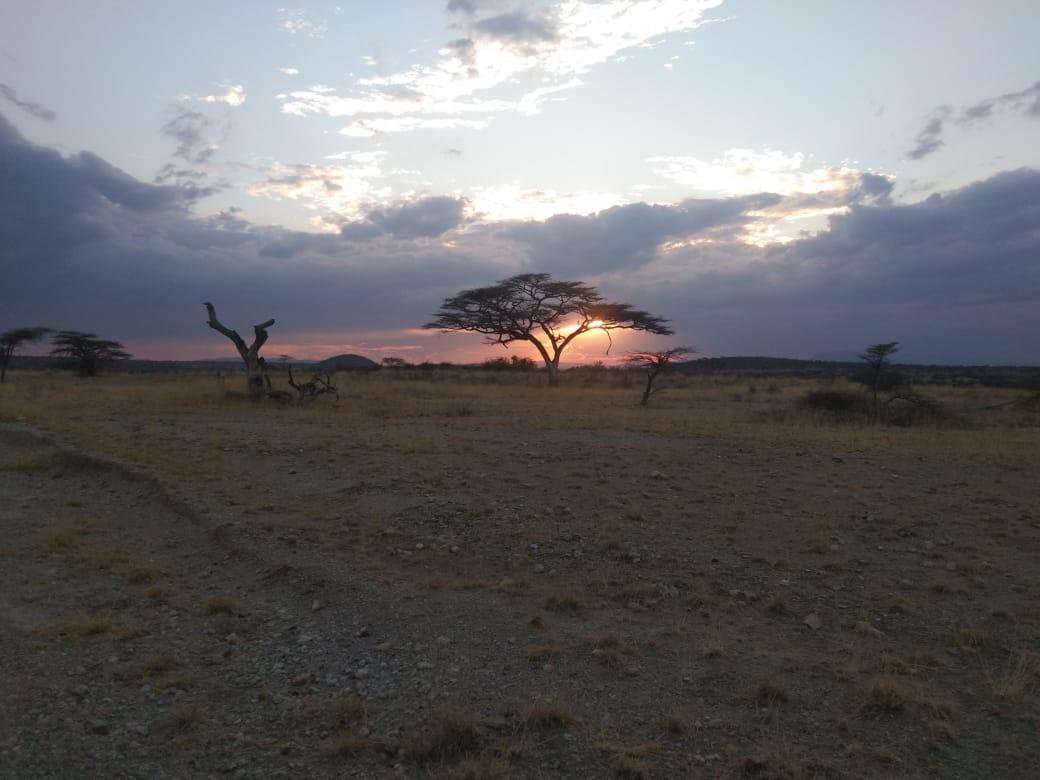 Dream Safari