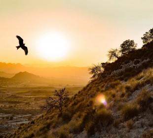 Birding, Landscapes and Cultural Trip in Spain