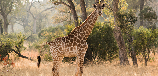 Kruger National Park 1