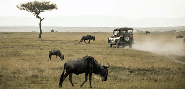 Maasai Mara National Reserve 1