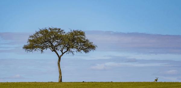 Maasai Mara National Reserve 3