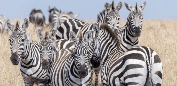 Maasai Mara National Reserve 4