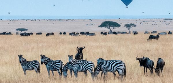 Maasai Mara National Reserve 5