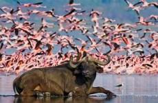 8-Day Luxury Kenyan Safari