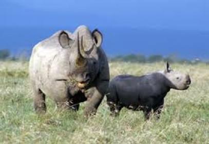 12-Day Best of Kenya Adventure Safari
