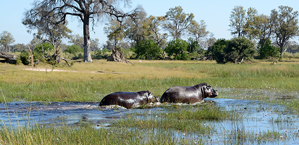 Okavango Delta 1