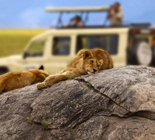 3-Day Saadani Exclusive Fly-in Safari