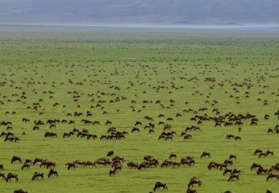 12-Day Kenya & Tanzania Budget Safari