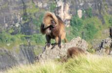 7-Day Simien Mountains Trekking Safari