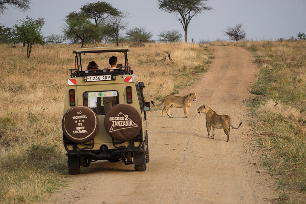 A Typical Day on a Tanzania Safari