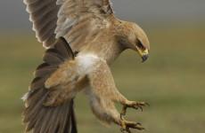 14-Day Ethiopia Birding Safari