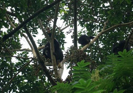 Vr 0287 [visit Rwanda] Nyungwe National Park