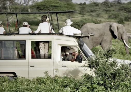 Watching Elephant Ndutu 2019 Scaled
