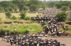Masai Mara Migration Safari