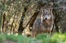 Wildlife Watching, Nature & Culture in Spain