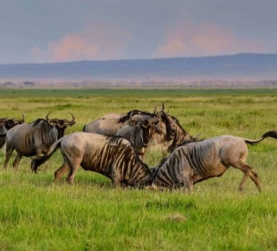 4 Days Tarangire Serengeti Ngorongoro Crater