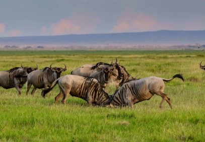 4 Days Tarangire Serengeti Ngorongoro Crater