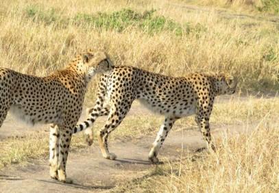 Explore Amazing Aberdare Ranges & Scenic Kenya Parks